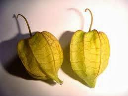Passiflora foetida, Physalis angulata expensive