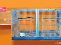 Cara perawatan TERBAIK saat memelihara burung lovebird