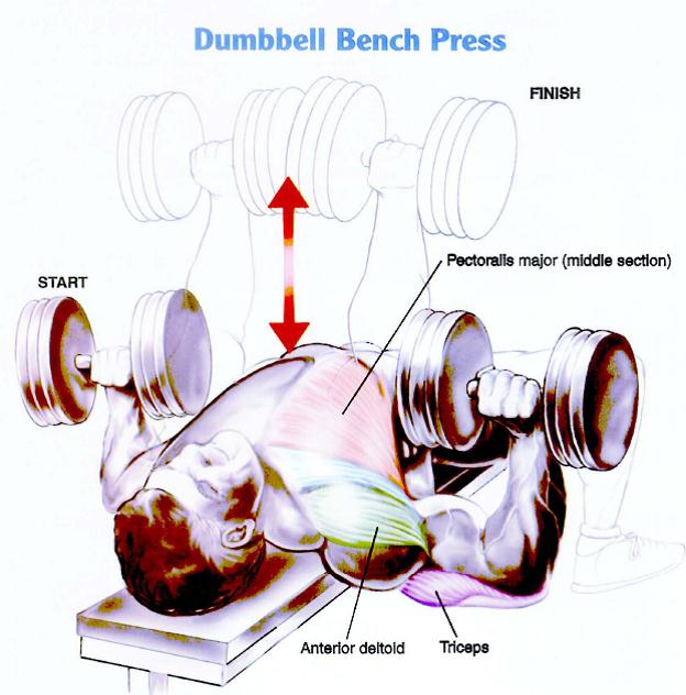 Single Arm Dumbell Bench Press: Top 5 Chest Exercises (for Mass)