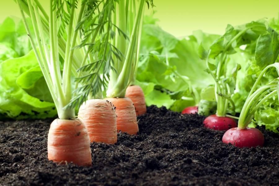 http://media.rtp.pt/praca/artigos/glifosato-herbicida-potencialmente-cancerigeno/