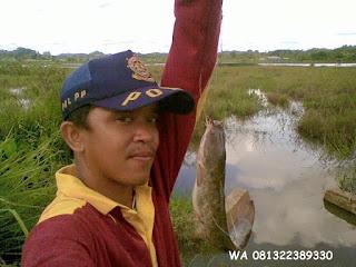 Essen Ikan Lele Yang Banyak Dicari dari Master Essen