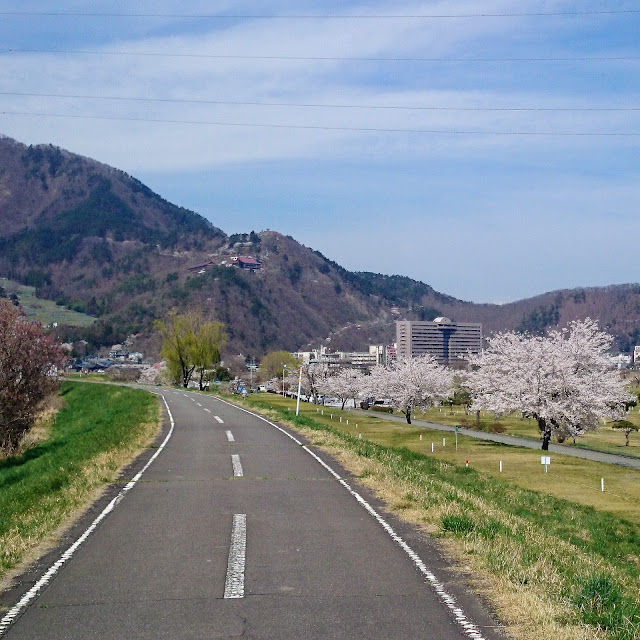 千曲川自転車道(上田更埴長野自転車道線) 桜