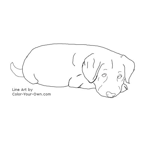 lab puppies coloring pages - photo#5