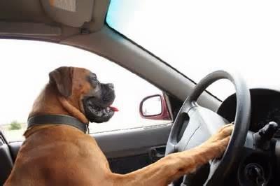 cara mengemudi yang benar