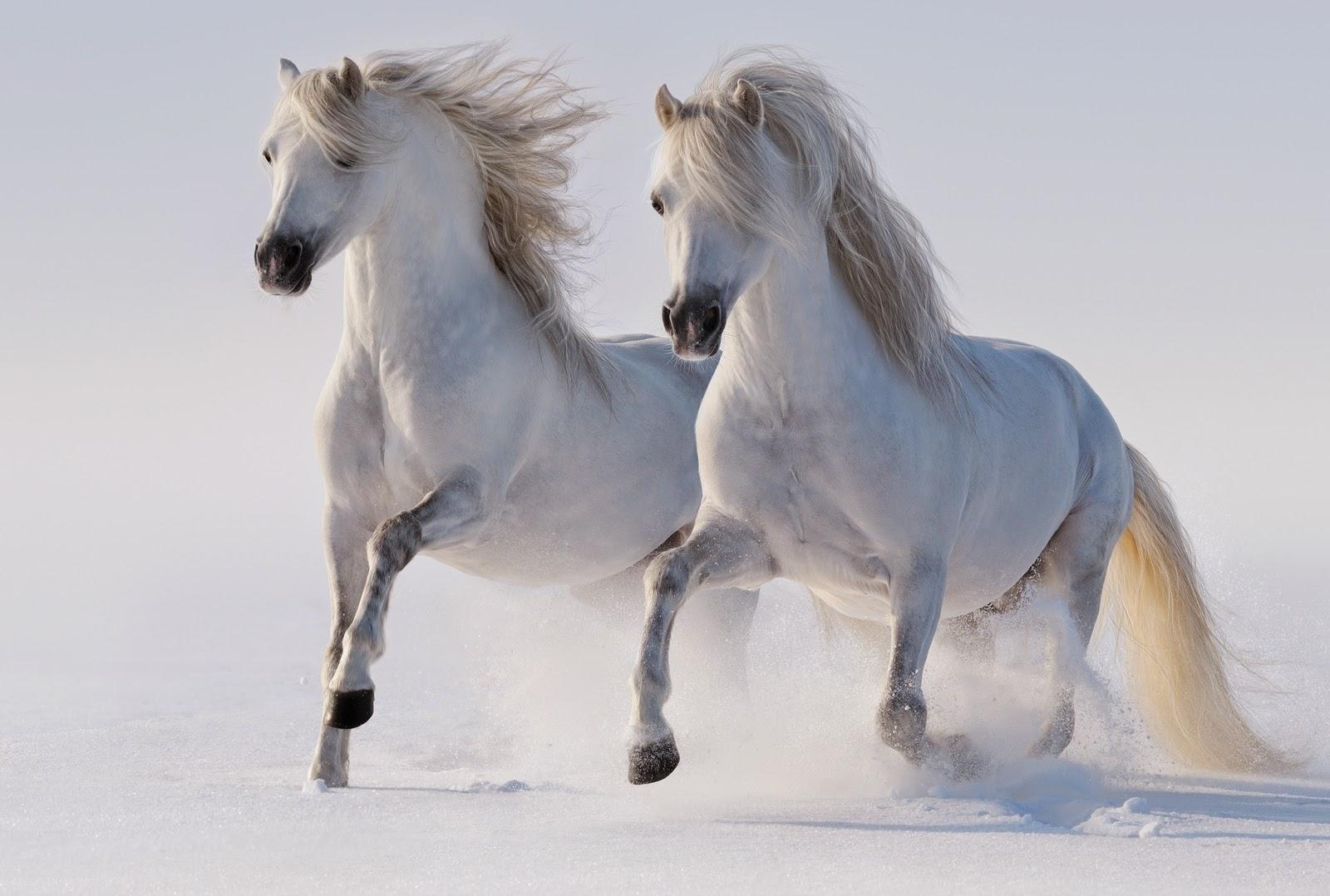 Rüyada Beyaz At Görmek