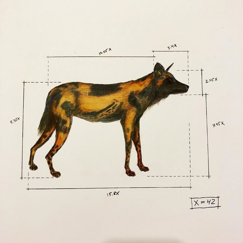 12-Hyena-Ran-Shapira-Animal-Drawings-from-a-Sculptor-s-Perspective-www-designstack-co