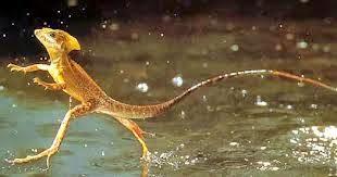 hewan terunik yang hidup di hutan amazon