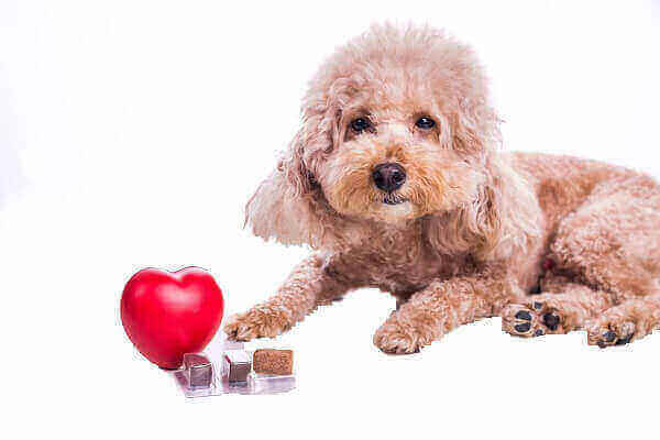 heartworms symptoms treatment prevention in humans how long can a dog live with heartworms dangers of heartworm medication heartworm disease heartworm life cycle  in dogs in cats caused by symptoms called  pills for dogs shots disease
