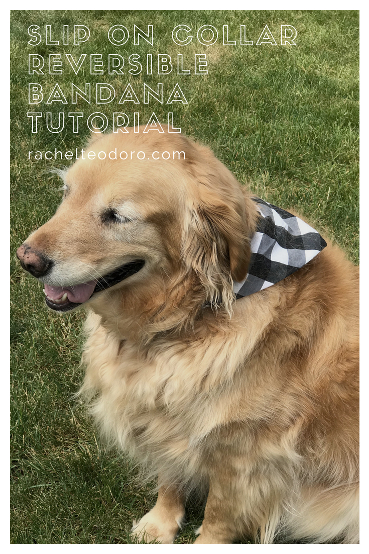 golden retriever with a bandanna