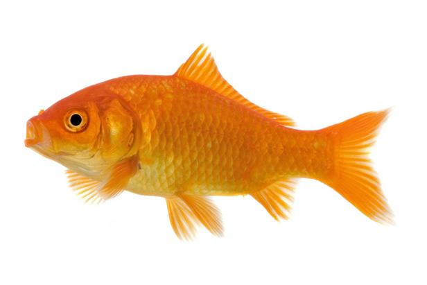 معلومات عن الأسماك