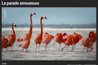 https://www.arte.tv/fr/videos/075938-001-A/le-jeune-un-animal-comme-un-autre-1-10/