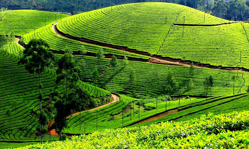 Kodaikanal, Best Hill Stations in India