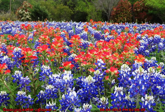 Best Spots in Texas to See Bluebonnets