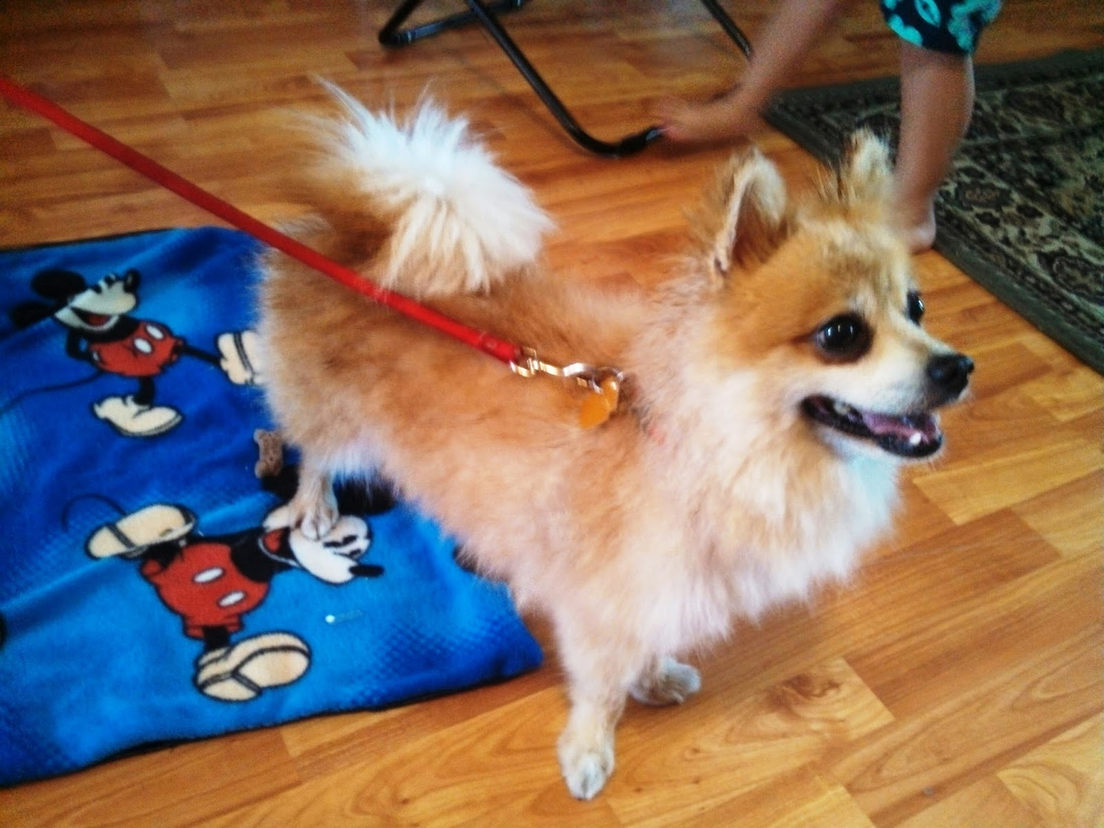 Grandma Bonnie's Closet: Our New Pound Puppy