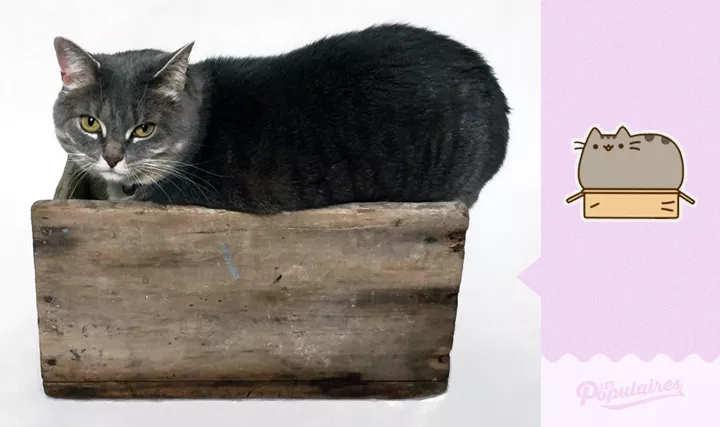 Momento awwn: Homem fotografa sua gata recriando stickers do Facebook Blog Fala Berenice