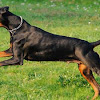 10 Most Intelligent Dog Race in the World