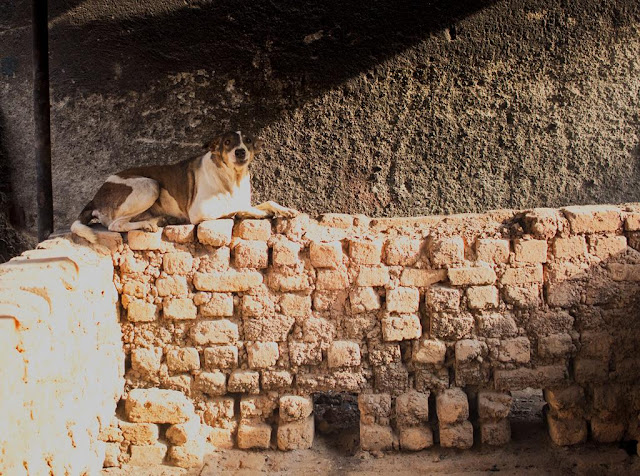dog, wall, kumbharwada, dharavi, mumbai, brick kiln, morning, street, street photography, streetphoto, india,