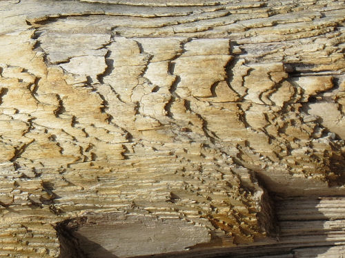 eroded driftwood layers