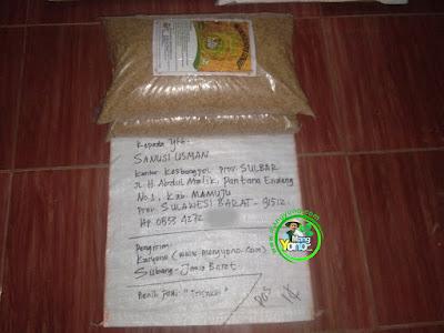 Benih pesanan  SANUSI USMAN Mamuju, Sulbar  (Sebelum Packing)