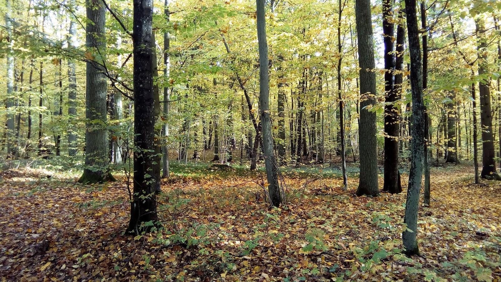 The autumnal Masuria
