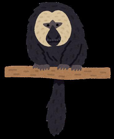 シロガオサキのイラスト(猿)