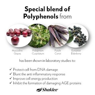 Anggur Muscadine dan Polygonum Cuspidatum adalah antara sumber terbaik Polyphenol dan Resveratrol