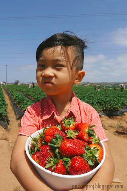 carlsbad strawberry company, strawberry, san diego, san diego kids, san diego family