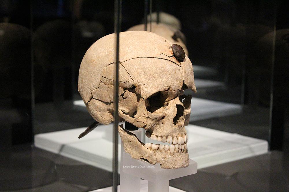 Cráneo enclavado procedente del yacimiento indiketa de Puig Sant Andreu (Ullastret, Girona). Foto: Laura Benito Díez - Jansá