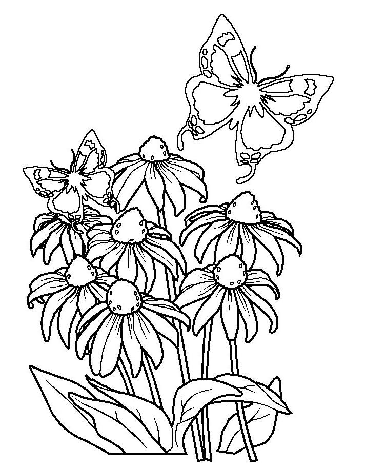 gambar mewarnai bunga matahari mawar tulip melati