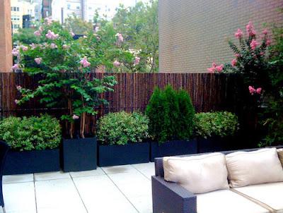 รั้วไม้ไผ่ในสวน