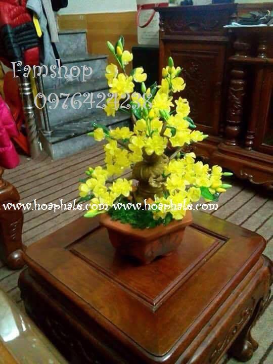 Goc bonsai cay hoa mai o Gia Thuy