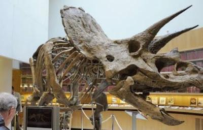 Dugaan Para Ahli Soal Fungsi Sebenarnya Tandak Dinosaurus