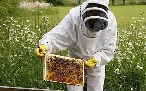 Felemás évet zárnak a méhészek 2016-ban, ugyanis a tavasz elején tapasztalt kellemes időjárást, az ország egyes részein fagyos, majd esős idő követte, amelynek eredményeként gyenge, közepes mézhozam várható – fogalmazott Czerván György agrárgazdaságért felelős államtitkár Jászberényben a XXIX. Nemzetközi Mézvárás és Méhésztalálkozó megnyitóján.