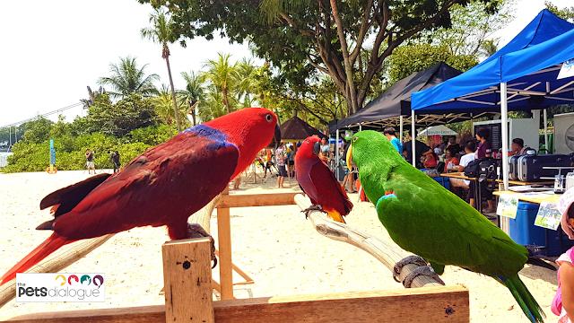 Bird event in Singapore