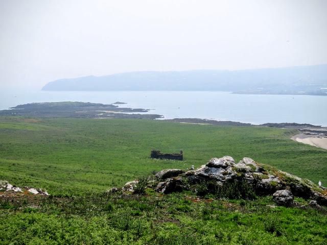 Day trip to Ireland's Eye Island - prickly meadow