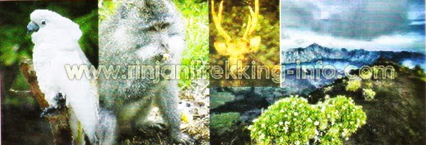 Might to see - Rinjani Trekking, Lombok-Indonesia