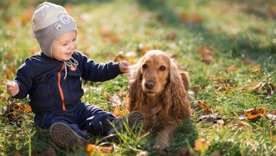 Igra sa novim ljubimcem Panvet veterinarska ambulanta Subotica