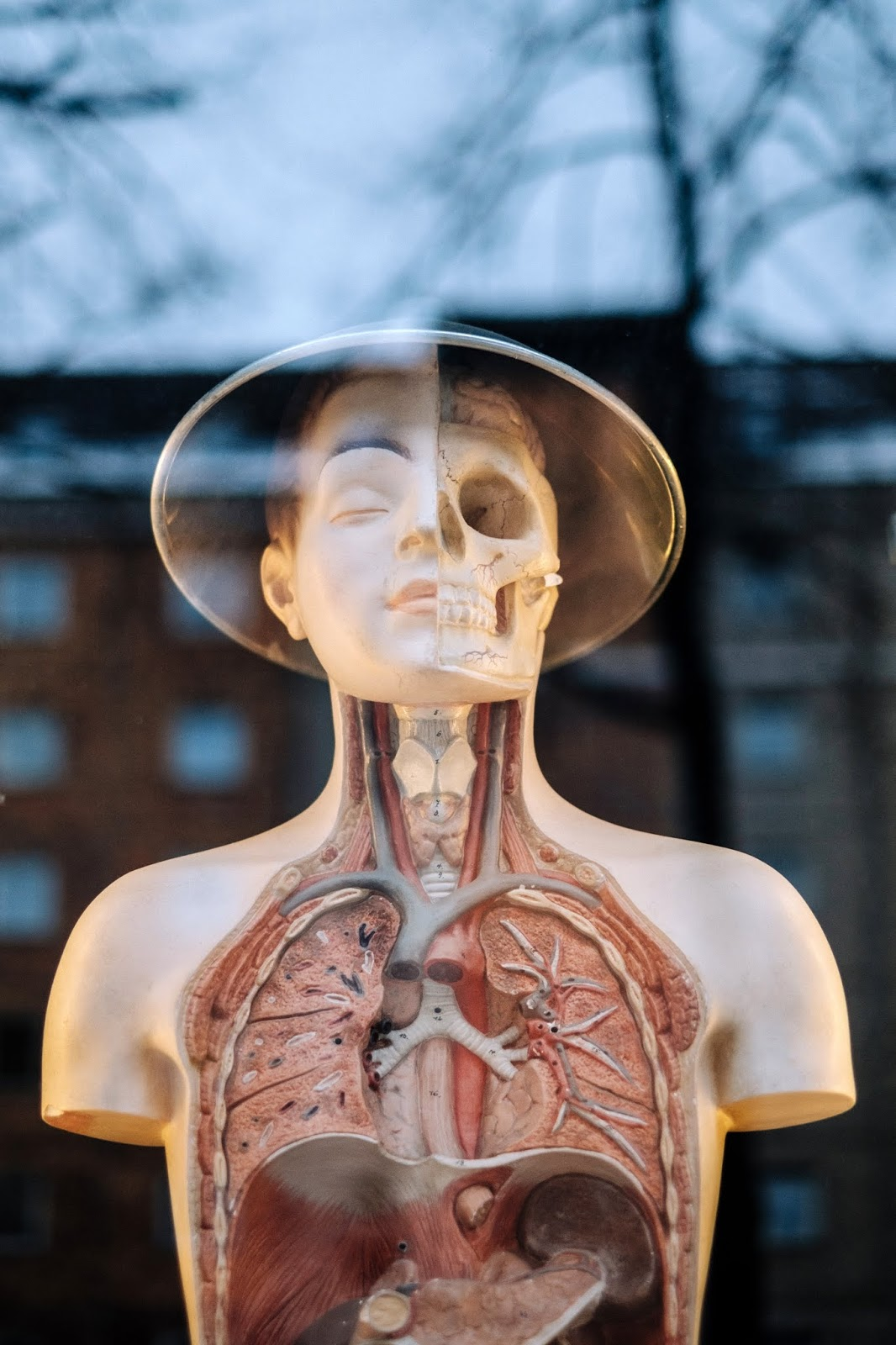 Kemik Ağrısına Ne iyi Gelir Bitkisel Çözüm
