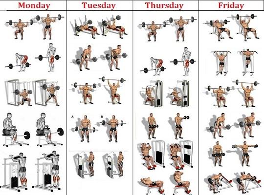massive muscle program