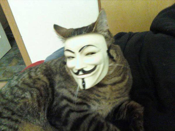 кот в маске анонимуса