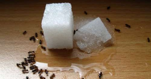 les anti fourmis naturels et conomiques prot ge ta sant. Black Bedroom Furniture Sets. Home Design Ideas