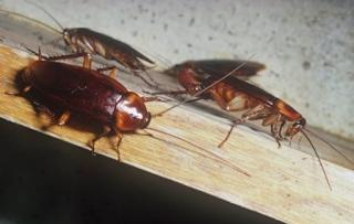 Δύο τρόποι να εξαφανίσετε τις κατσαρίδες από το σπίτι σας μια για πάντα