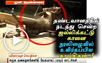 தண்டவாளத்தில் நடந்து சென்ற ஜல்லிக்கட்டுக்காளை, ரயில் மோதியபோதும் நூலிழையில் உயிர்தப்பிய வீடியோ காட்சிகள்..! Tamil Viral Videos,