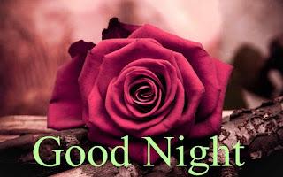 Red Rose Good Night My Love