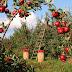 Weerbare planten en teeltsystemen essentieel voor toekomst gewasbescherming