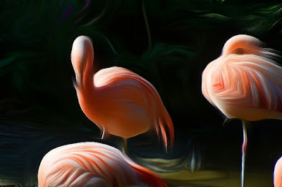 Vogel, bird, oiseau, Uccello, Pássaro, птица, pájaro, kuş,