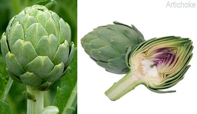 artichoke vegetable