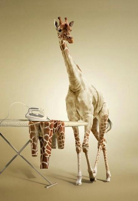 giraffa, fotomontaggio, manipolazione, ferro da stiro,