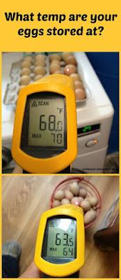 ideal egg storage temperature