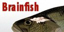 Brainfish 8 AP for Android Brainfish